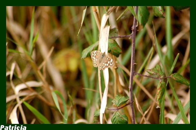 papillon dans nature 08210